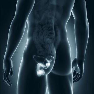 Organi genitali maschili